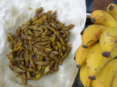 Grasshoppers fried in oil, salt and chopped onion.